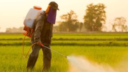 Are You Eating Glyphosate – Treated Wheat?
